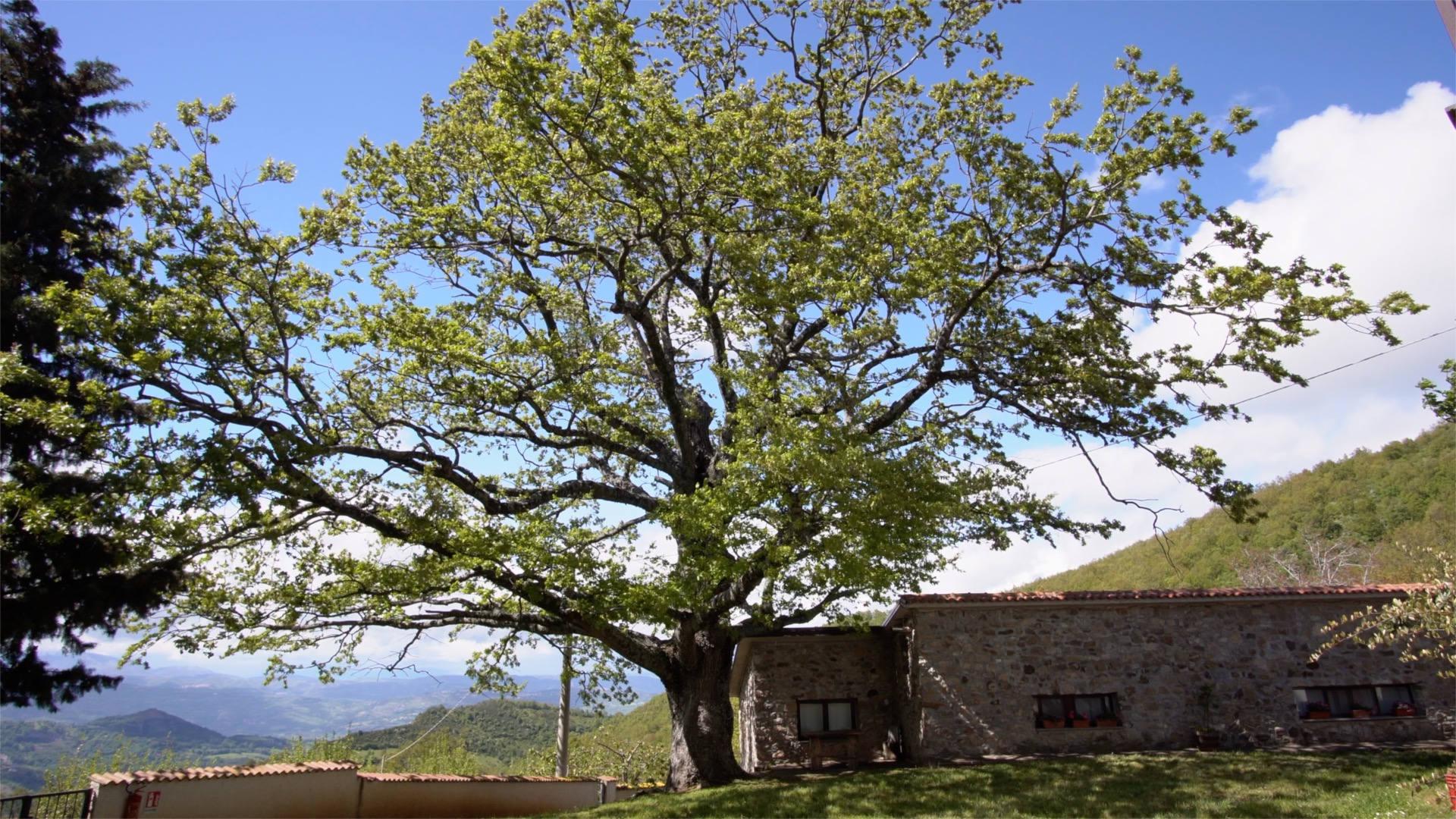 Agriturismo Acacia relax e verde nel mezzo del Parco Nazionale del Pollino